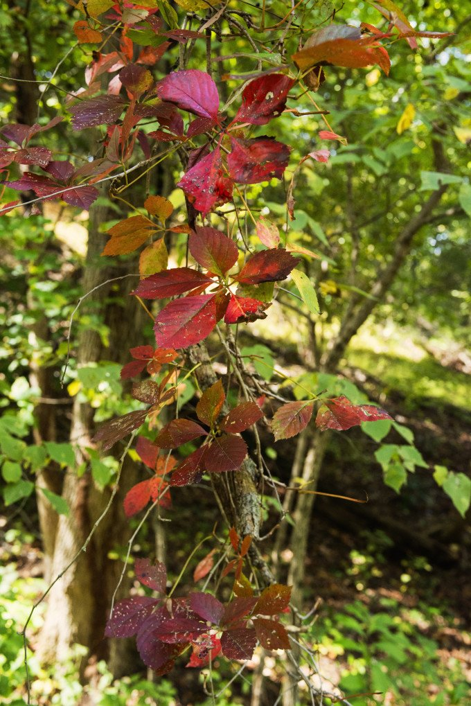 autumn forest foliage colors
